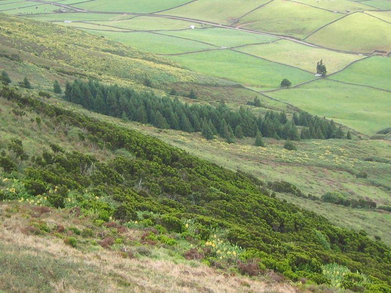 Terceira 2009 061